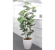 光触媒 人工観葉植物 カポック1.8