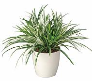 光触媒 人工観葉植物 ドラセナミックス