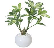 光触媒 人工観葉植物 シェフレラポット