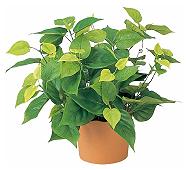 光触媒 人工観葉植物 ライムポトス