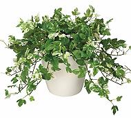 光触媒 人工観葉植物 アンペロシスアイビーM
