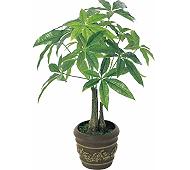 光触媒 人工観葉植物 パキラポットM