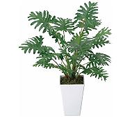 光触媒 人工観葉植物 クッカバラ