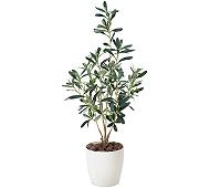 光触媒 人工観葉植物 オリーブ