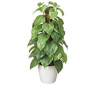 光触媒 人工観葉植物 フレッシュポールポトス
