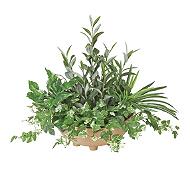 光触媒 人工観葉植物 寄せ植えオリーブ
