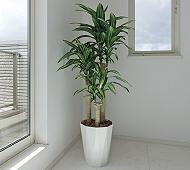 光触媒 人工観葉植物 幸福の木1.6