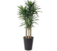 光触媒 人工観葉植物 幸福の木1.8