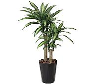 光触媒 人工観葉植物 幸福の木1.1