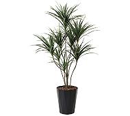 光触媒 人工観葉植物 ユッカ1.8