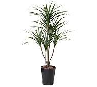 光触媒 人工観葉植物 ユッカ1.35