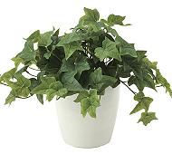 光触媒 人工観葉植物 フレッシュアイビー