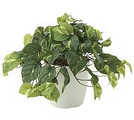 光触媒 人工観葉植物 フレッシュポトス