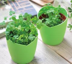 きっとみつかる四つ葉のクローバー栽培セット