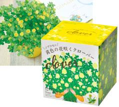 シアワセの黄色の花咲くクローバー栽培セット